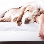 Partilhar a vida com um animal de 4 patas