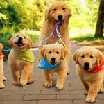 6 Truques para Treinar o seu Cão com sucesso!