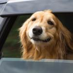Ter cães ajuda a prevenir doenças cardiovasculares