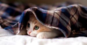 dicas-para-o-frio-gato