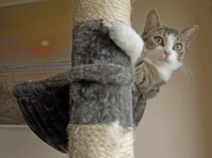gato-arranhar-5