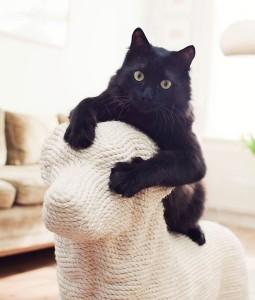 gato-arranhar-7