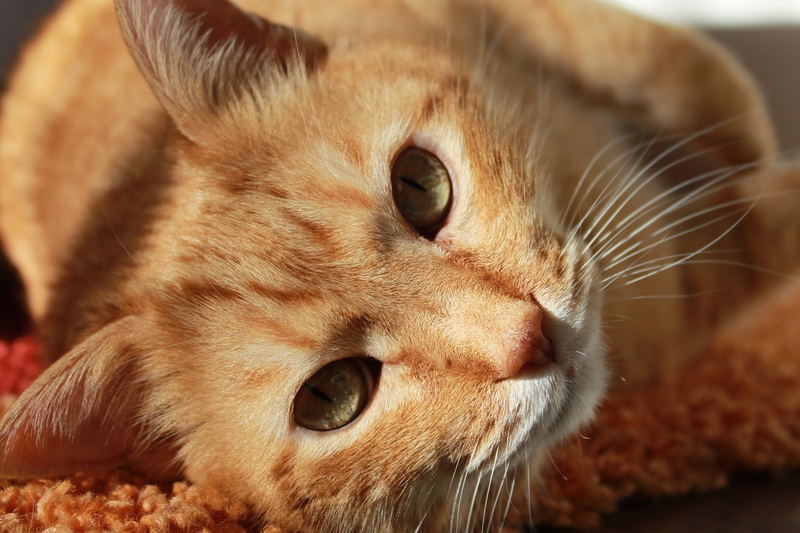 cat-friend-animal-pets-39311