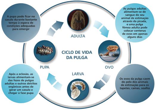 infografia_seresto