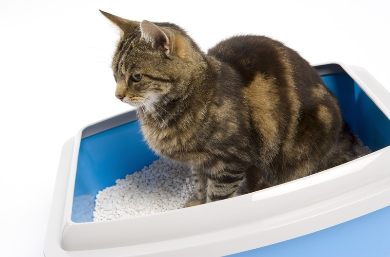 cat-litter-azul