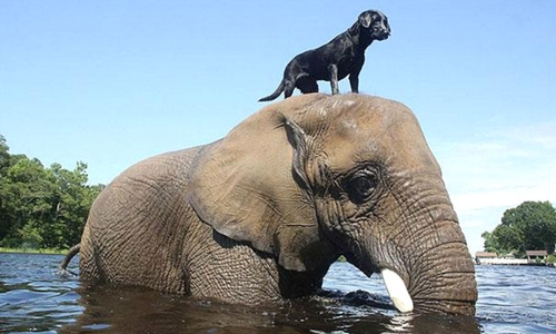 05-elefante-amigo