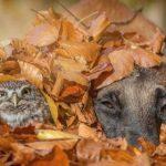 Cães e gatos precisam de cuidados especiais no outono