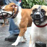 Cães potencialmente perigosos – o que diz a Lei?