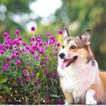 Esterilização nos cães. Porquê?