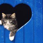 Esterilização em gatos. Porquê?