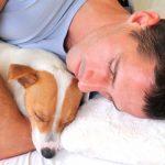 5 Vantagens em dormir com o seu cão