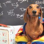 Eu Cuido. Um mundo melhor para os animais chega às escolas do Porto e Lisboa!