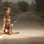 Menos animais mortos na estrada!
