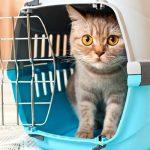 Como levar o seu gato à clínica