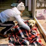 Gente Boa! 3 Bons Exemplos de Amor pelos animais