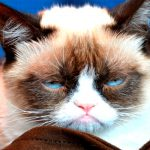 "Faça agora o ""Teste Stress Felino"" e descubra se o seu gato está stressado?"