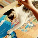 Obra interativa é o primeiro livro do mundo para ler com gatos