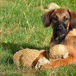 Sabia que aumentaram os crimes de abandono e maus-tratos a animais?