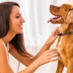 Microchip para animais de estimação: tudo o que precisa de saber