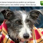 Como saber se meu cão está a passar frio?