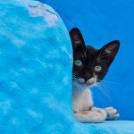 Veja a Vida dos Gatos de Rua Pelo Mundo Inteiro