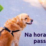 10 dicas para passear com o seu cão de forma segura e saudável