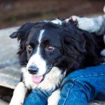 Estudos demonstram: o nosso stress contagia os animais