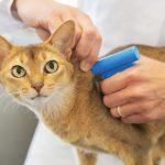 SIAC – Sistema de Informação de Animais de Companhia. Conheça as novas regras e evite as multas!